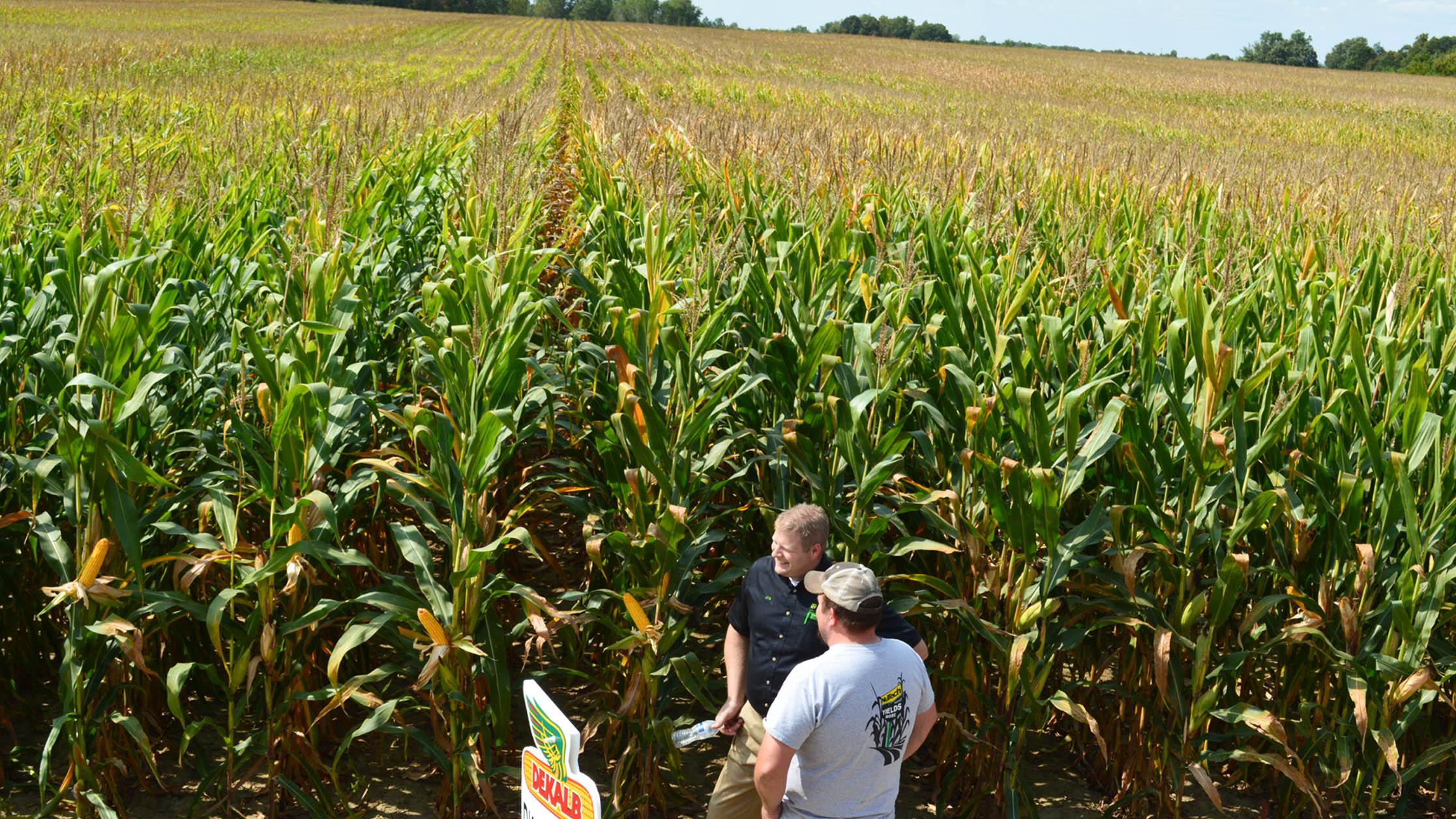 Hunt Farms cornfield, Genesee County, MI
